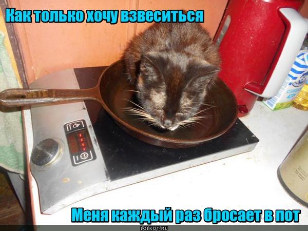 Жизнь домашнего приюта для котеек 137
