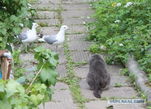 http://s00.yaplakal.com/pics/pics_original/8/1/2/5036218.jpg
