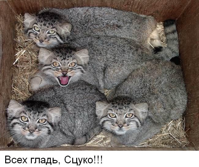 погладь котика