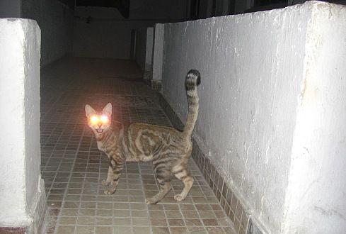 Аццкий кот