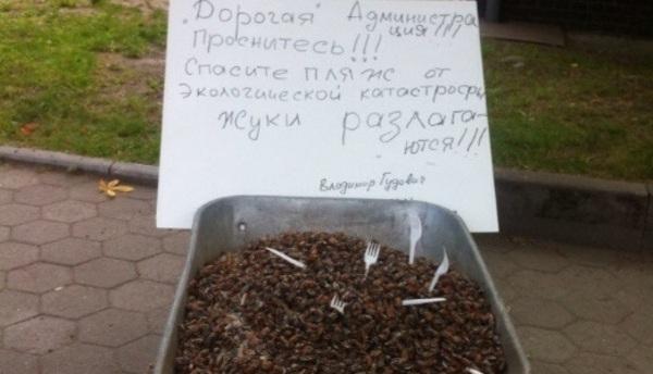 Пенсионер высыпал на ступени администрации Зеленоградска две тачки мёртвых майских жуков