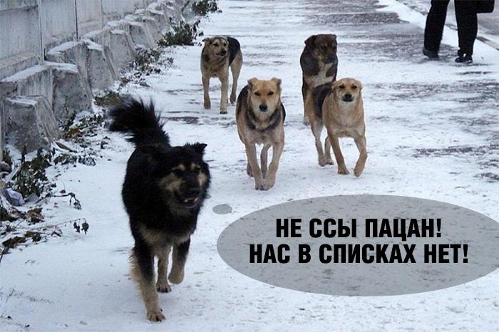 http://s00.yaplakal.com/pics/pics_original/8/2/8/12791828.jpg