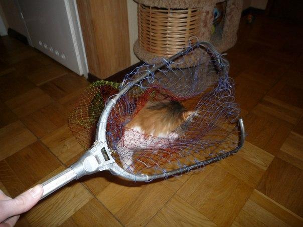 ловить дикую кошку