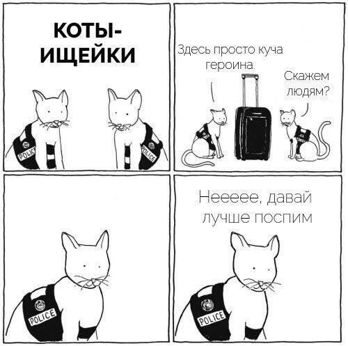 S-котство
