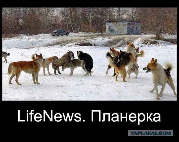 Кабмин утвердил упрощение пребывания иностранных журналистов в Украине - Цензор.НЕТ 7979