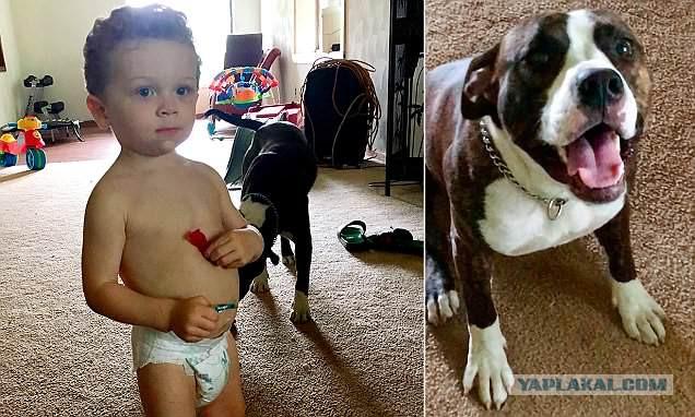 В Детройте полиция нашла пропавшего в лесу ребёнка по следам лап не отходящей от него собаки