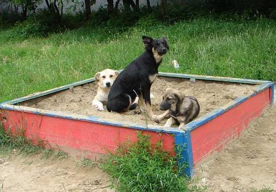 Собака на детской площадке закон