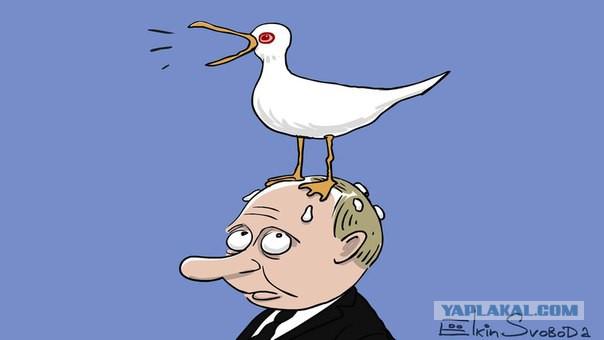 Ёлкин - про Чайку и Путина