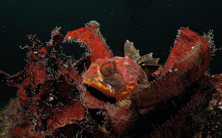 знакомство с жителями подводного мира