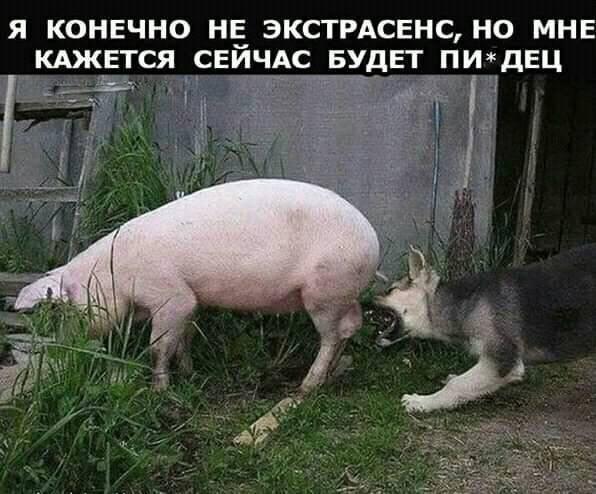 http://s00.yaplakal.com/pics/pics_original/8/5/3/13087358.jpg