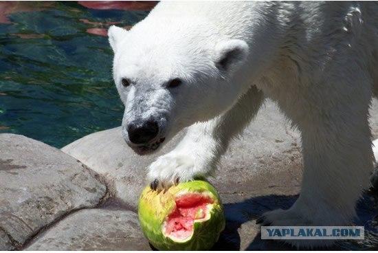 11. Комменты: 0 ссылка.  Злобный медведь злобно разодрал