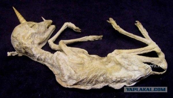 На северо-западе гренландии охотники нашли древнюю могилу, в ней немного позже обнаружили 8 мумий