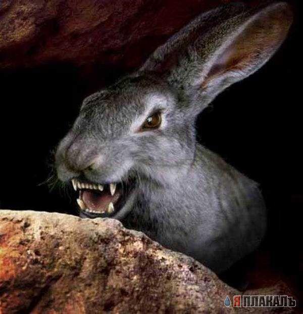 фото смешные зайцы