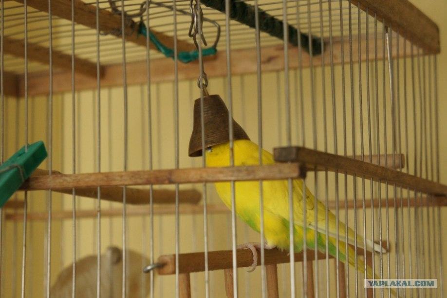 Колокольчик для попугая своими руками 4