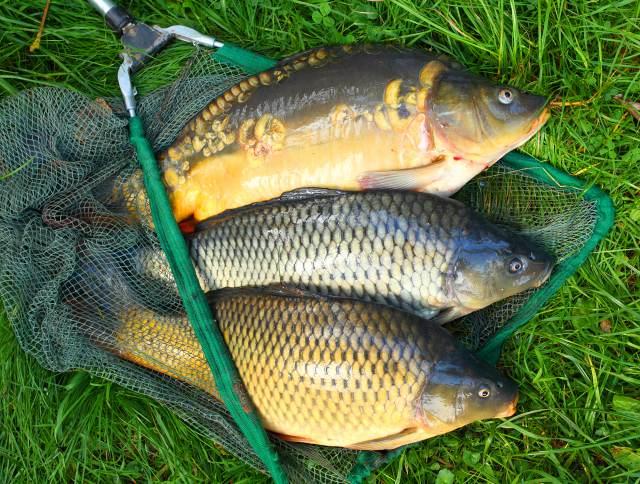 Названы новые правила рыбалки в России