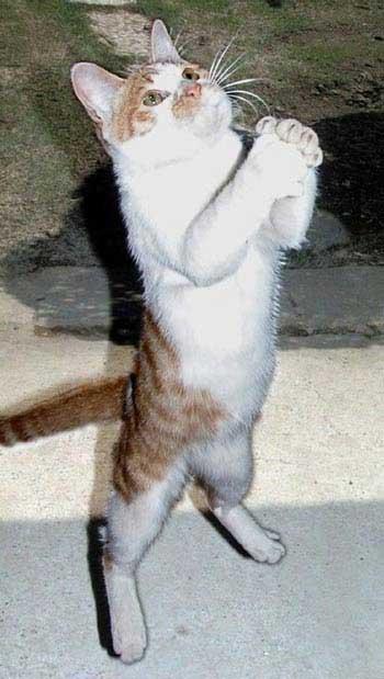 Умоляю кот