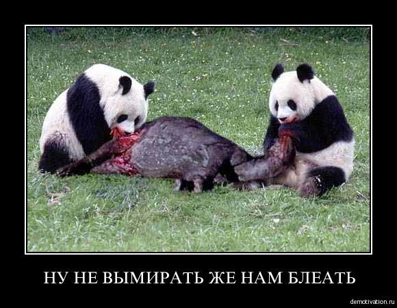 Белки едят не только орехи. Кровь-кишки-жесть...