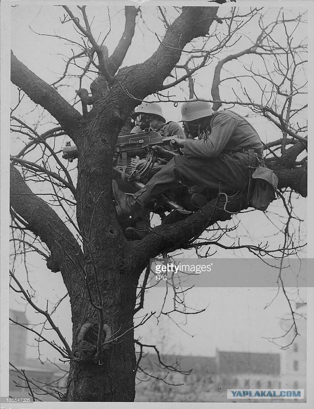 Про кукушек на деревьях и немного про Симу Хайхя