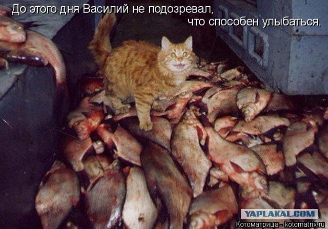 Картинки по запросу наглые рыжие коты фото