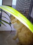 Рыжий котенок ищет дом
