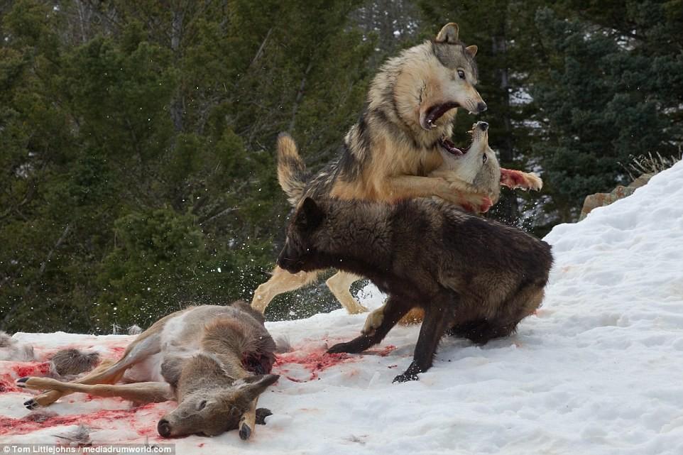 с голодной волчицей выходит на дорогу году Сбербанк предлагает