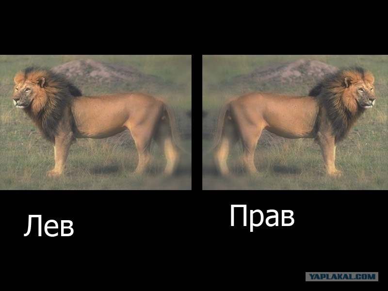 Анекдоты Про Льва Видео