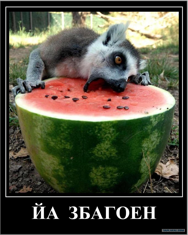 Животные едят фото 3