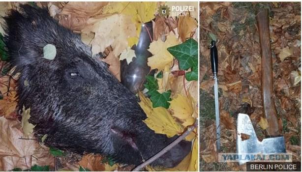 Берлинский пенсионер хотел мяса. Он пошел в лес, забил кабана и попался полиции