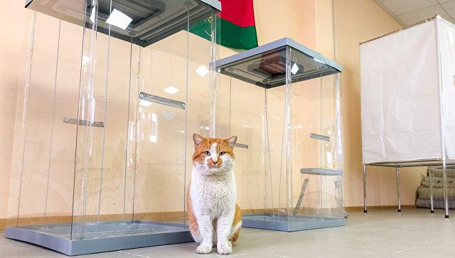 Кот Мостик следит за подготовкой избирательного участка у Крымского моста