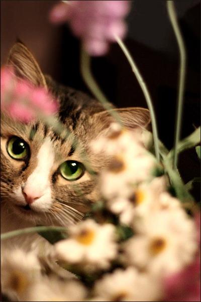 Котовторник, Весна, Цветы!