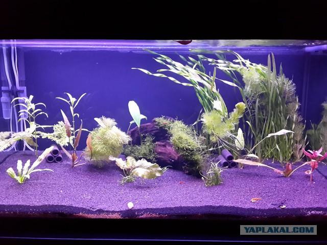 запуск аквариума с растениями видео Brubeck
