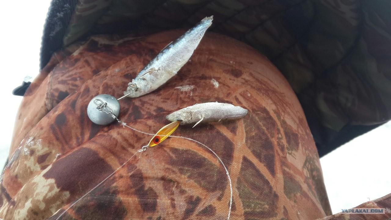 ловля судака на тюльку видео летом