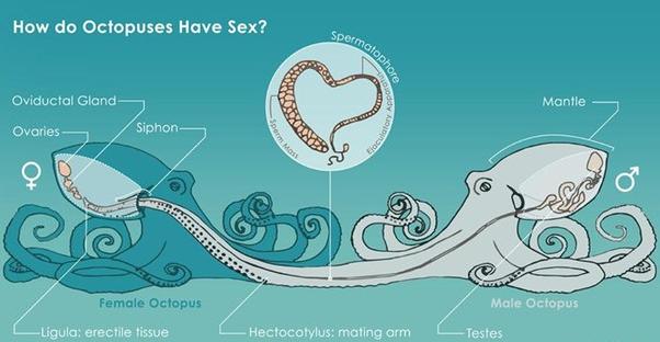 Если бы люди занимались сексом, как животные