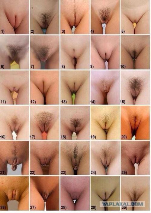 Чужим мужиком различные виды вагин фото голая жена бане