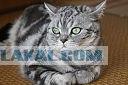 Кот ищет хозяина (Москва)