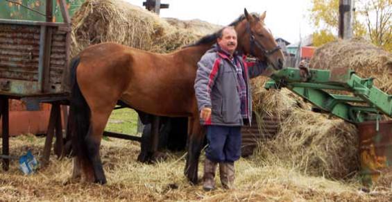 Камчатский депутат потребовал место для парковки коня у здания администрации