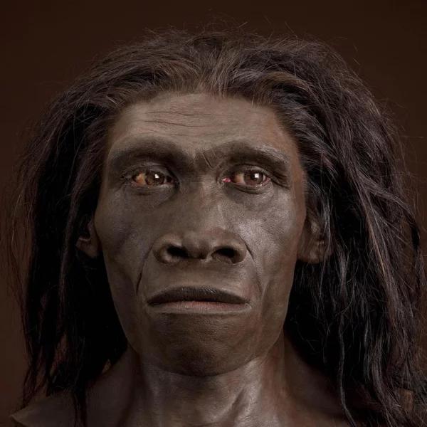Откуда взялись неандертальцы и кроманьонцы