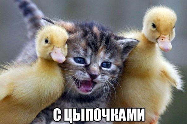 http://s00.yaplakal.com/pics/pics_original/9/2/9/13849929.jpg