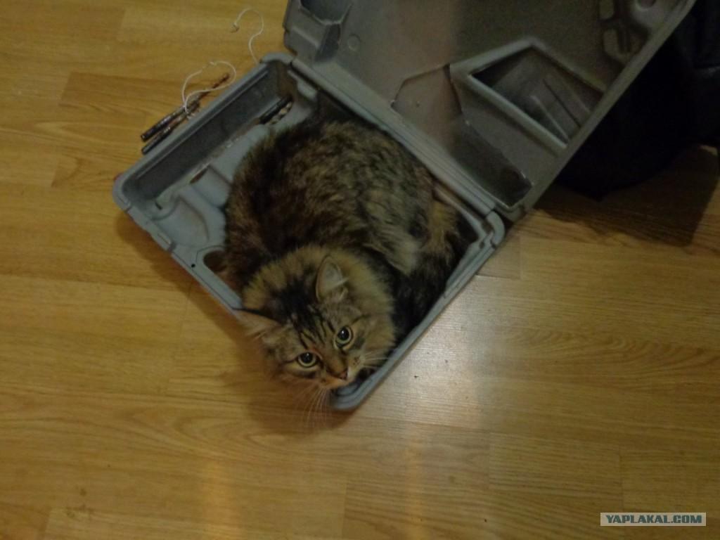 Цитата если у вас дома есть кот