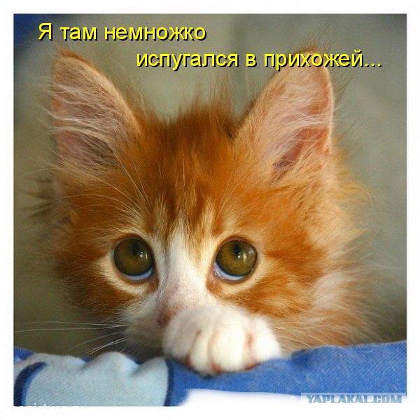 Понивиль мультики на русском языке новые