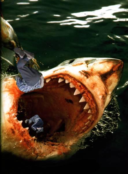 Курс молодого бойца в отпуске.  Как отбиться от акул и комаров?