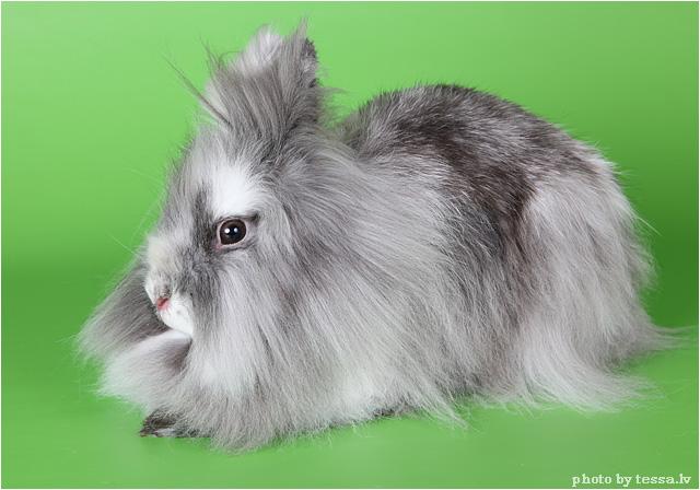 Кролики - это не только ценный мех.