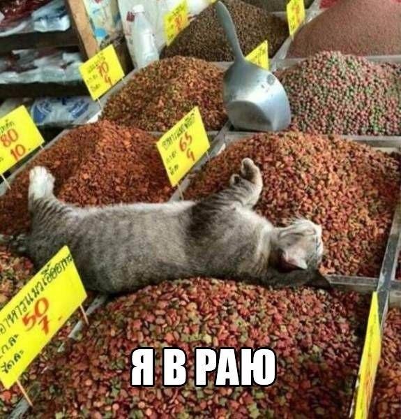 Смешные картинки из сети на 24.10.16