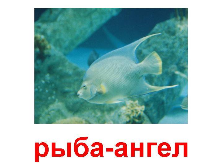 про агнец божий рыбалка
