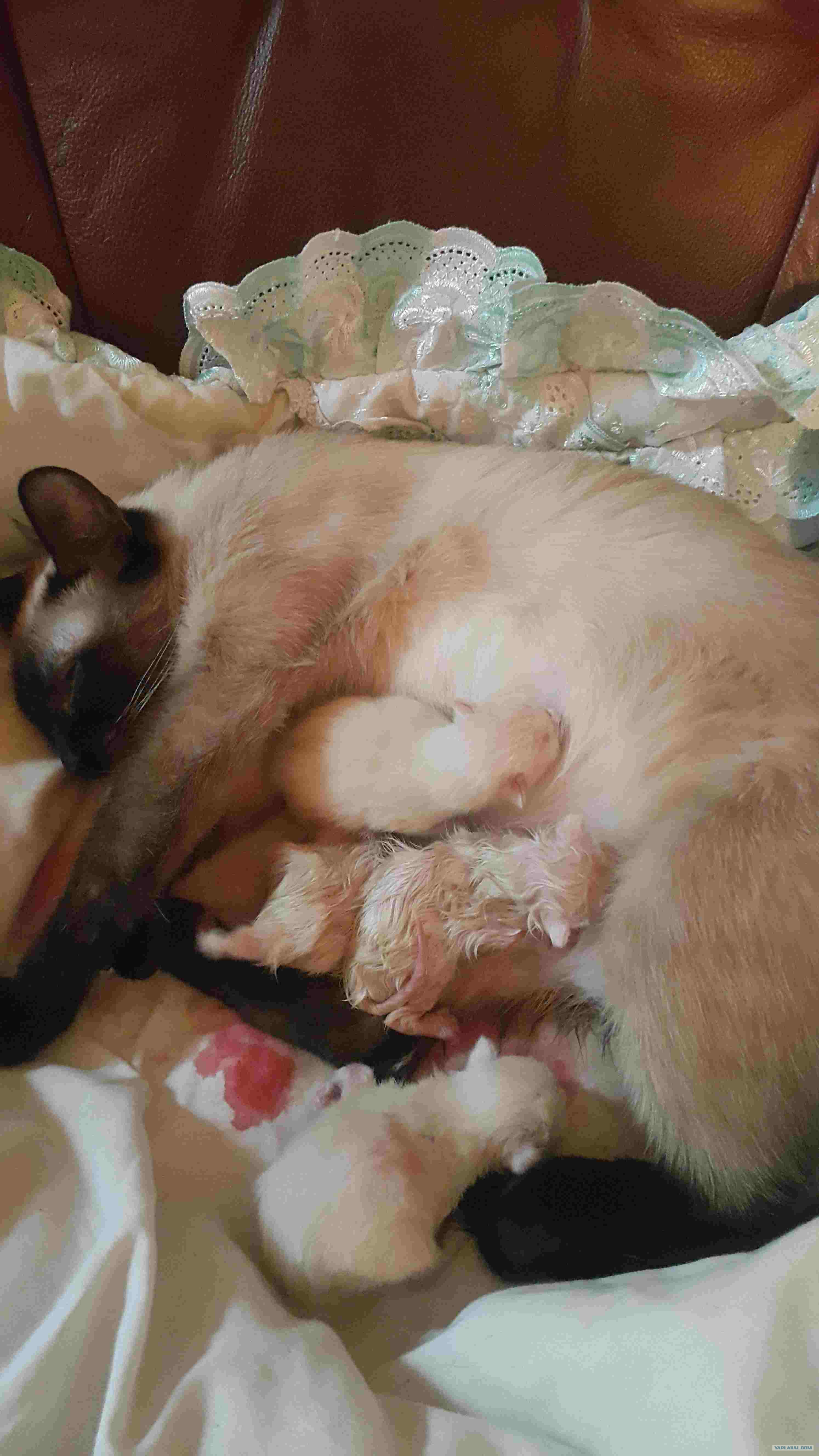 Кошка родила фото ребенка