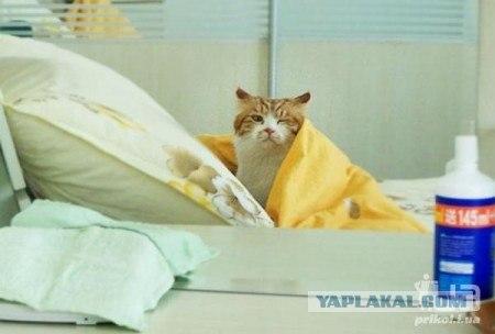 может ли котенок родиться с лишаем фото.