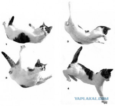 Феномен падающей кошки  оптимист