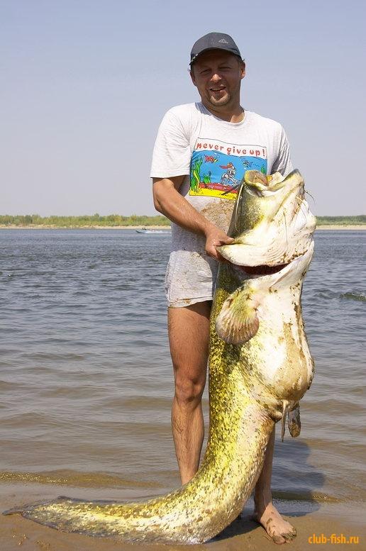 необычные уловы рыбаков фото