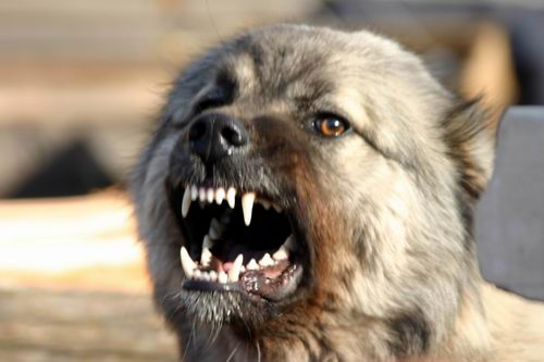 Стая собак напала на мужчину с ребенком