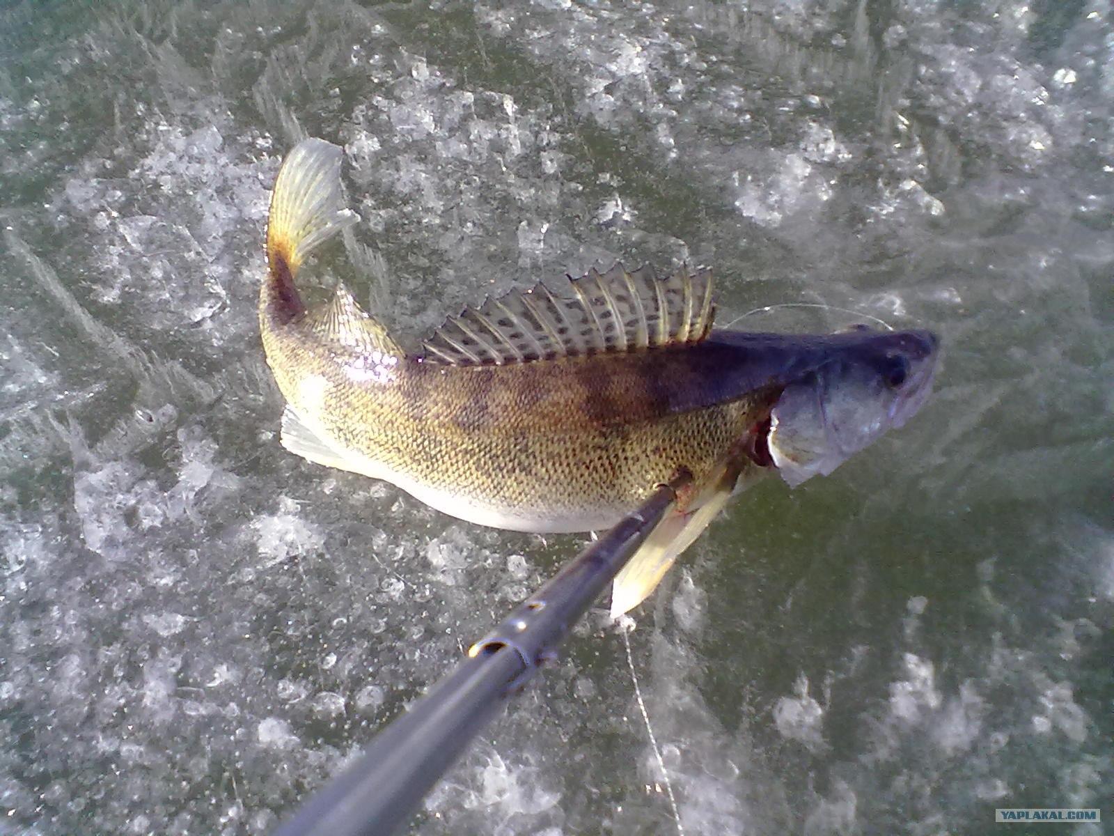 рыбалка на османа казахстан